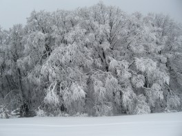 Ай-Петринский лес зимой