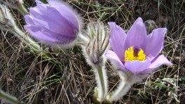 Цветы восходителям