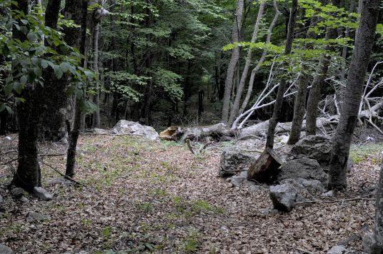 Дерево упало на трос выше 9 опоры