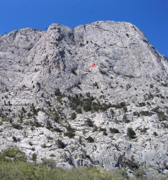 Красной стрелкой показано место отступления - змеиного гнезда