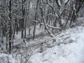 """Ряд деревьев существенно сократил """"тормозной"""" путь, но не уберёг от повреждений."""